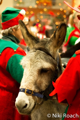 Donkey Sanctuary Christmas 2015-20