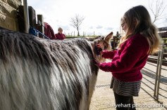 Donkey Spring Fair 2016-12