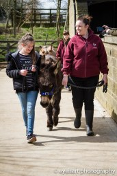 Donkey Spring Fair 2016-13